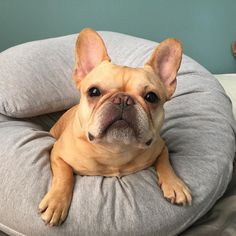 dog イヌ 犬可愛い画像まとめ http://ift.tt/1SlrwjC