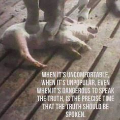 Why are you still contributing to an industry that does this? Go Vegan. Be a part of the compassion movement.