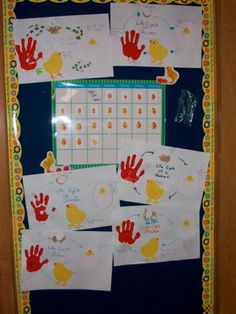 Embryology bulletin board.  We kept track of our chicks' daily development and students made life cycle of a chicken posters to display.
