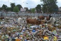 Temporary Landfill