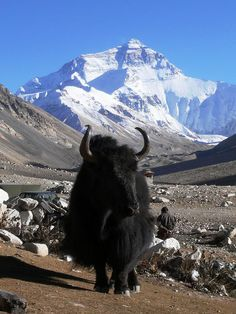 Mount Everest is the Earth's highest mountain.