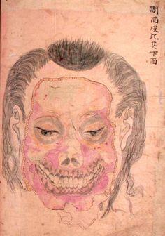 Japanese anatomical illustration