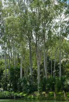 Gardens of Roberto Burle Marx  Inhotim Cultural Centre, Sao Joaquim de Bicas, Brazil