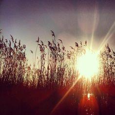 #reed #merwede #sun #sunshine #sky #bluesky #hardinxveld #holland #instagram #instanature #nature #naturelovers #instagramhub #igershardinxveld #instahardinxveld #picoftheday #photooftheday #bestoftheday #statigram