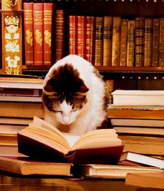 Don't bother me, I'm reading.