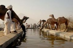 Pushkar Camel Festival, India: November  An enormous camel fair with music, events, exhibitions, and cultural market stalls.
