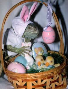 Assistant to the Regional Easter Bunny