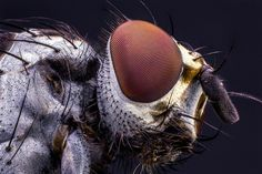 Fly Insect Eyes, Macro Photography, Bugs, Creatures, Instagram, Animals, Garden, Pictures, Underworld
