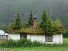 Das bisschen Unkraut aufm Dach! - Garten Trend  http://by3.eu/gtckxp