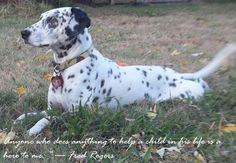 Looking Dot-Amazing Deaf Therapy Dog!!