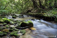 #Hike the Bear Creek trail near Ellijay, winding through a beautiful, fern-filled creek valley to the second largest living tree in #Georgia.