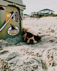 pup doin a relax and chill Cute Puppies, Cute Dogs, Dogs And Puppies, Doggies, Funny Dogs, I Love Dogs, Puppy Love, Animals And Pets, Cute Animals