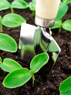 Epsom Salt / Green Gardening  Why Epsom Salt works well