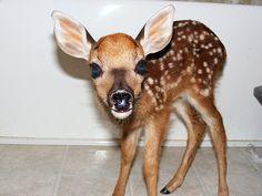 dear deer face.