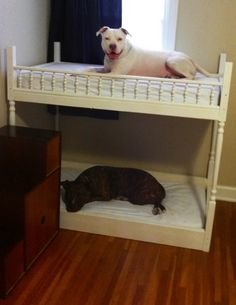 DIY Pet Bunk Bed Plans to Build Dog Bed