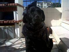 Wolf at the Door: Report do Caeser # 1 - O Blog do Lobo é MEO http://lobo-na-porta.blogspot.pt/