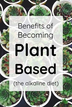The benefits of being plant-based. Some great tips on how to become vegan and eat a healthy diet filled with fruits, veggies, nuts, and seeds all rich in plantbased proteins. The Chemistry of Food: Acid-Alkaline Balance Alkaline Diet Plan, Acid And Alkaline, Alkaline Diet Recipes, Raw Food Recipes, Benefits Of Alkaline Diet, Plant Based Diet Benefits, Benefits Of Vegetarian Diet, Vegetarian Diets, Vegetarian Italian