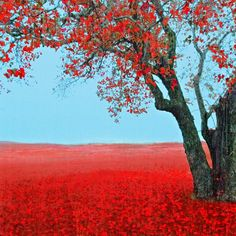 love the beautiful red and blue. this would be beautiful in a frame - or an outfit combo inspiration