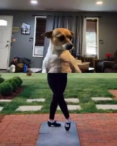 Dancing expert😂 #funny #dog #dance Super Cute Puppies, Baby Animals Super Cute, Cute Baby Dogs, Silly Dogs, Cute Funny Dogs, Cute Little Animals, Cute Funny Animals, Funny Animal Jokes, Funny Dog Memes