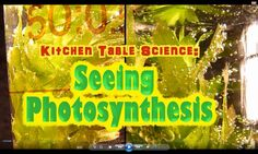 STAAR Science: Photosynthesis /carbon dioxide-oxygen cycle for 5th grade