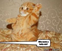 I Wants One - funnycatsite.com#cats #funny #cute