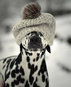 """""""Do you like my hat?"""" All Dogs, I Love Dogs, Dalmations, Cute Puppies, Cute Dogs, Dogs And Puppies, Doggies, Baby Animals, Animals And Pets"""