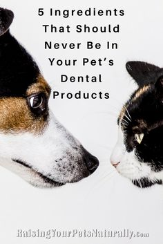 5 Ingredients That Should Never Be In Your Pet's Dental Products. You want what is best for your pets. You know that good dog and cat dental care and daily teeth cleaning is important. You stop at your local pet store or even your veterinarian's office to pick up a tube of pet toothpaste and a pet toothbrush, only to later find out there are some unsavory ingredients in your pet's toothpaste. How can this be? How can a product that is intended for good dental care contain such nasty and…