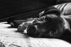 Descargar foto gratis de un perro tumbado descansando > http://imagenesgratis.eu/imagen-gratis-de-un-perro-tumbado-descansando/