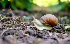 Are snails making a meal of your beautiful garden? Here are two budget-friendly ways to deal with them …