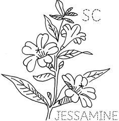 South Carolina Jessamine | 출처: turkeyfeathers