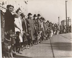 """1937 Dog Show?  In the right background there is a street sign for """"Ontario"""". At left holding Dobermans I think I can recognize at least two of the women from the 1937 Youngstown dog show photograph."""