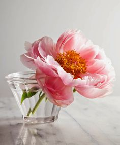 Single Peony. | Express Photos