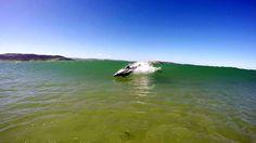 ÀCurio Bay, en Nouvelle-Zélande, ce dauphin surfe sur la vague!