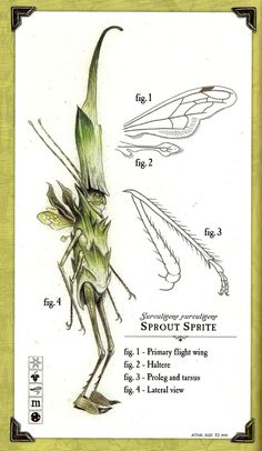 Care and Feeding of Sprites - Spiderwick Chronicles Wiki - Wikia