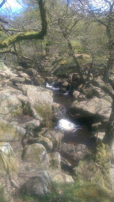 Padley Gorge. Derbyshire.