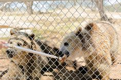 12. Feed a grizzly bear. | 18 Things You Didn't Know You Could Do In San Diego