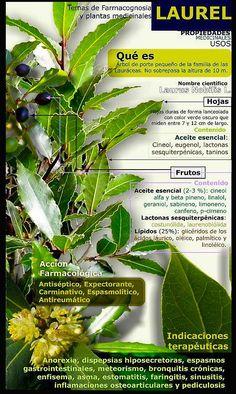 Plantas medicinales. Benecifios Culinarios.