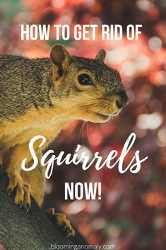 Are pesky squirrels destroying your garden and pla Indoor Gardening Supplies, Container Gardening, Gardening Tips, Squirrel Repellant, Mice Repellent, Get Rid Of Squirrels, Garden Animals, Garden Pests, Plant Needs