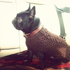 I'm in love with this #Frenchie...Cooper...whom I've never met....    photo via @j_graves on Instagram