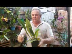 Adubação Complementar de Orquídeas - YouTube
