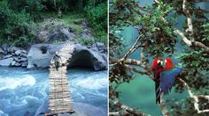 Madidi National Park Tourism, Bolivia - Next Trip Tourism