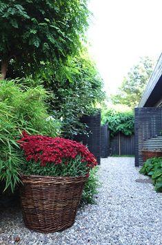 Höstinspiration — Almbacken Trädgårdsdesign