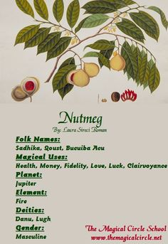 Nutmeg Magical Properties - The Magical Circle School - www.themagicalcircle.net