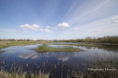 Reflection on the Marsh @ Cosumnes River Preserve