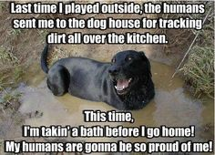 Labs and water, any water.