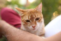 "It's name is ""Mercimek"" Photography Portfolio, Cats, Animals, Gatos, Animales, Animaux, Animal, Cat, Animais"