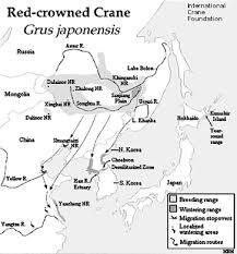 Image result for RedCrown cranes
