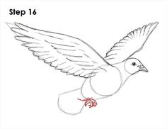 how to draw a dove step by step