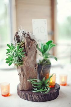 Reception Table Succulent Centerpiece With Votives can add touches of floral to these cool wood stumps