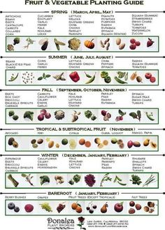 When to plant vegetables.Spring (Sept-Nov), Summer (Dec-Feb), Fall (Mar-May), Winter (June-Aug). http://calgary.isgreen.ca/